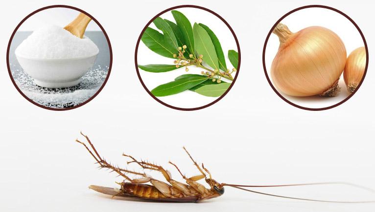remedios caseros contra las cucaracha