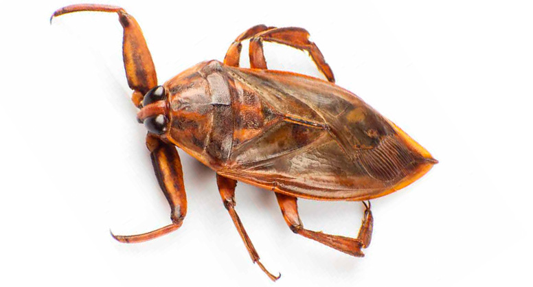 cucaracha agua