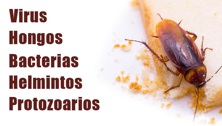 enfermedades de las cucarachas