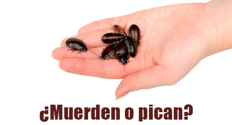 las cucarachas pican al ser humano